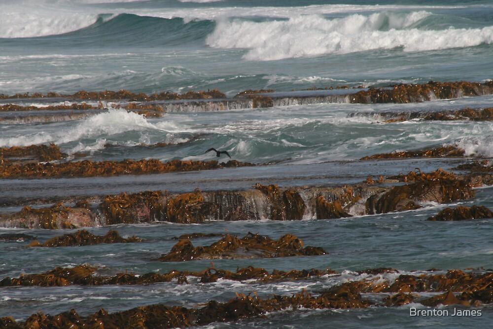 Rocky Coast by Brenton James