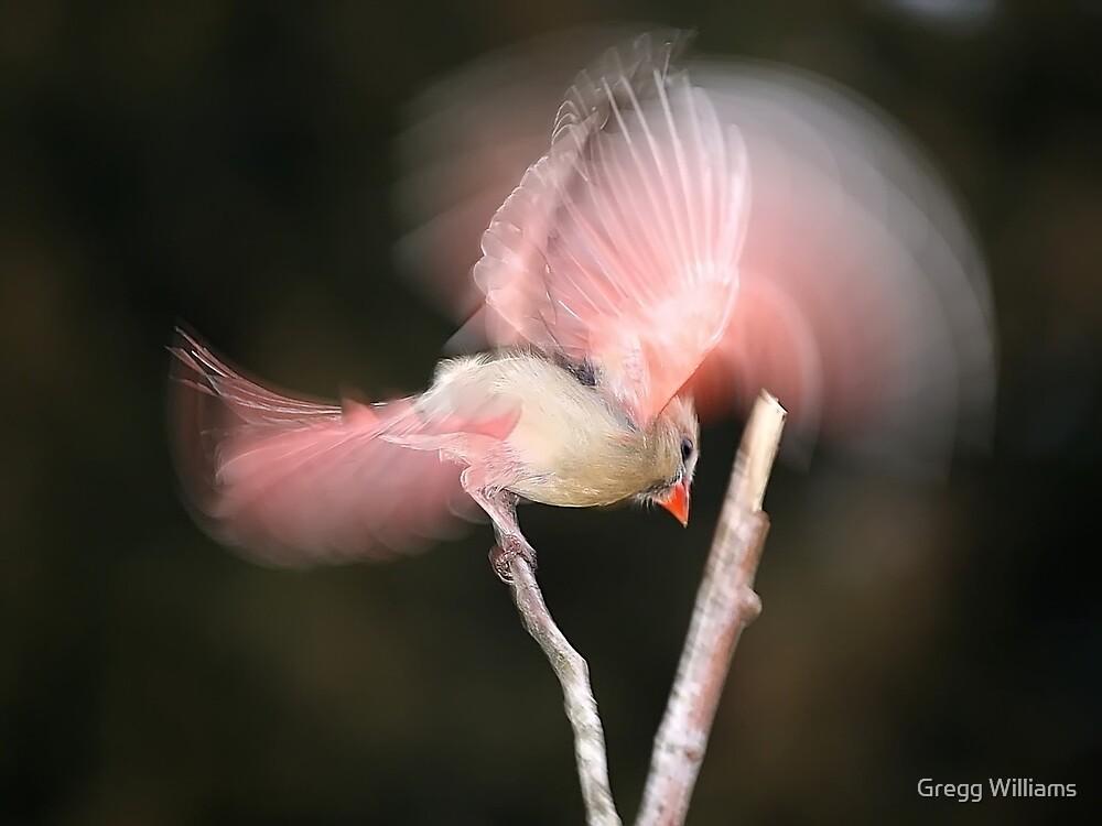 Angel Bird by Gregg Williams