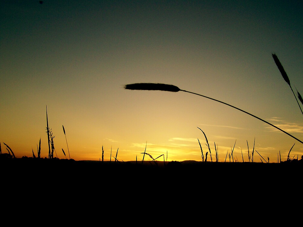 Sunset in a field by Sam Everitt