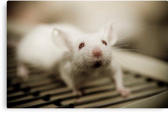 Lab Mouse by AquaMarina