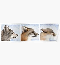 Vanishing Canids Poster