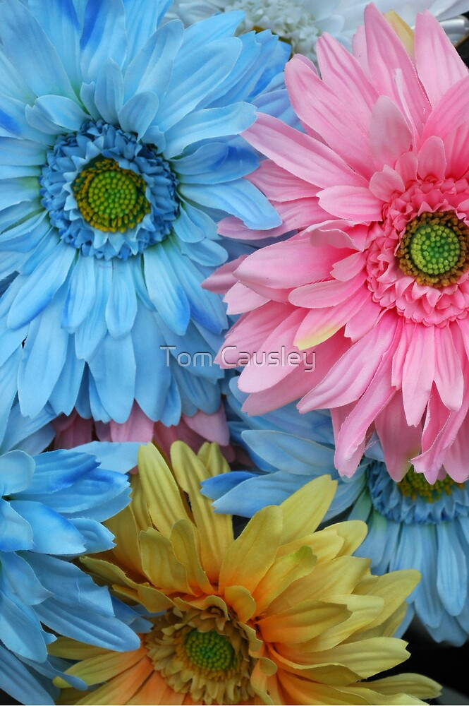Three Party Flowers by Tom Causley