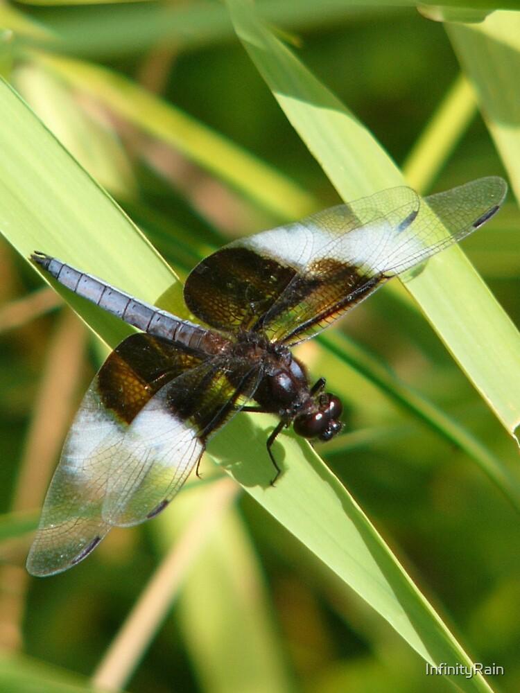 Saddlebag Dragonfly by InfinityRain