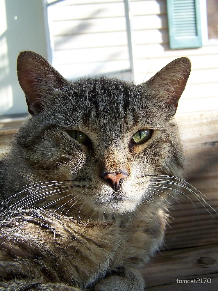 cat not amused by tomcat2170