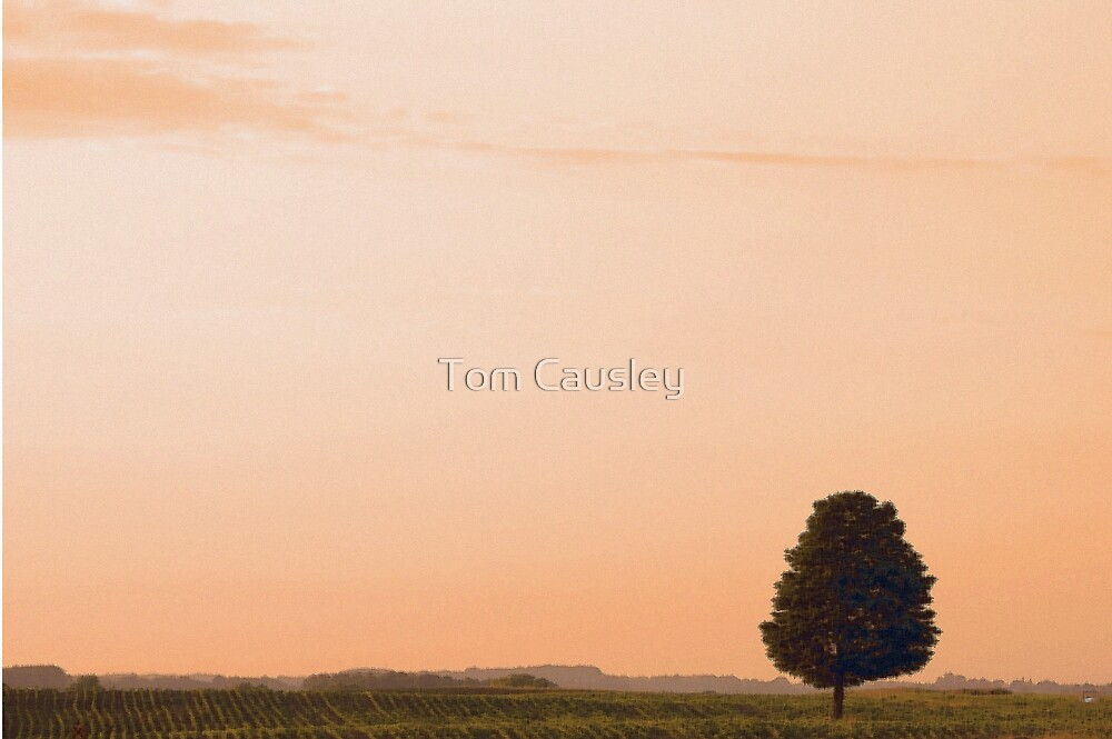Sundown by Tom Causley