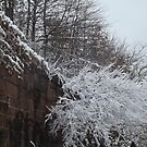 Harsimus Branch Embankment, Snow View, Jersey City, New Jersey  by lenspiro