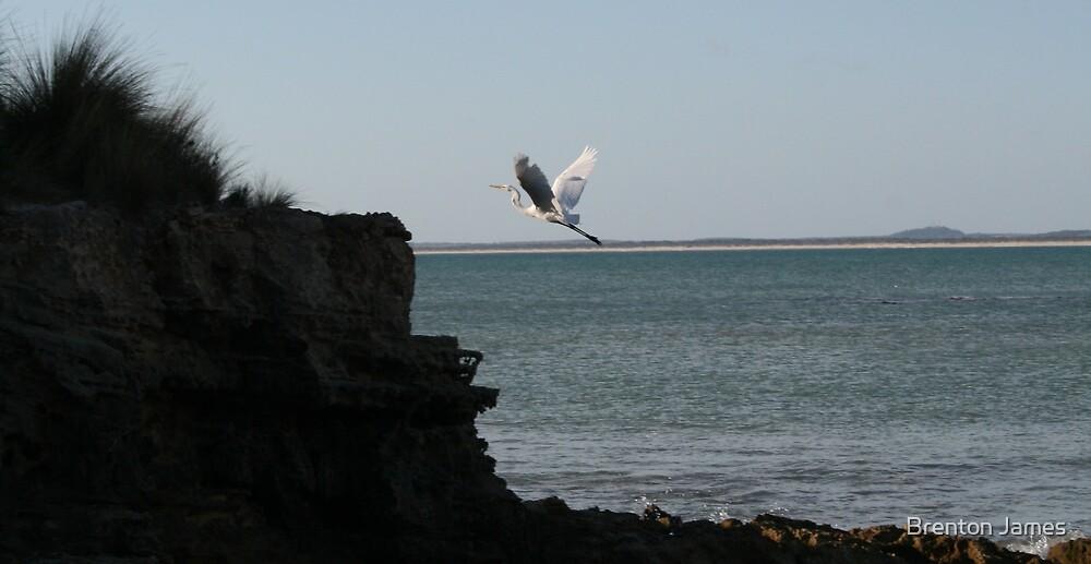 Egret takes flight by Brenton James