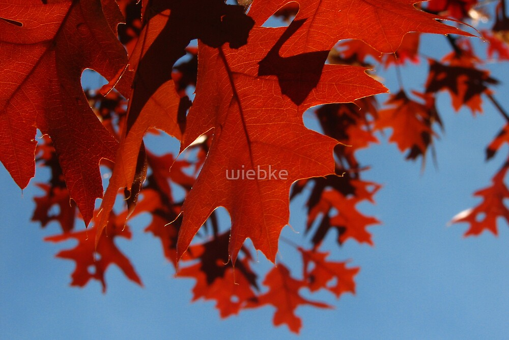 Autumn Red by wiebke