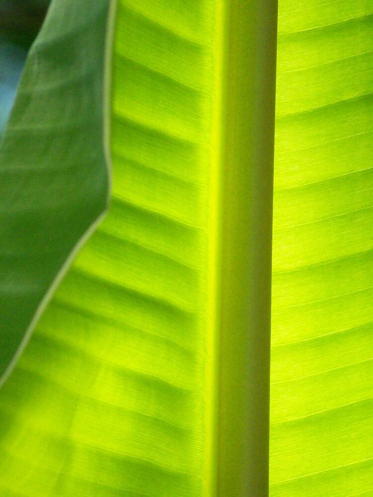 Light through the Leaf by skurm002