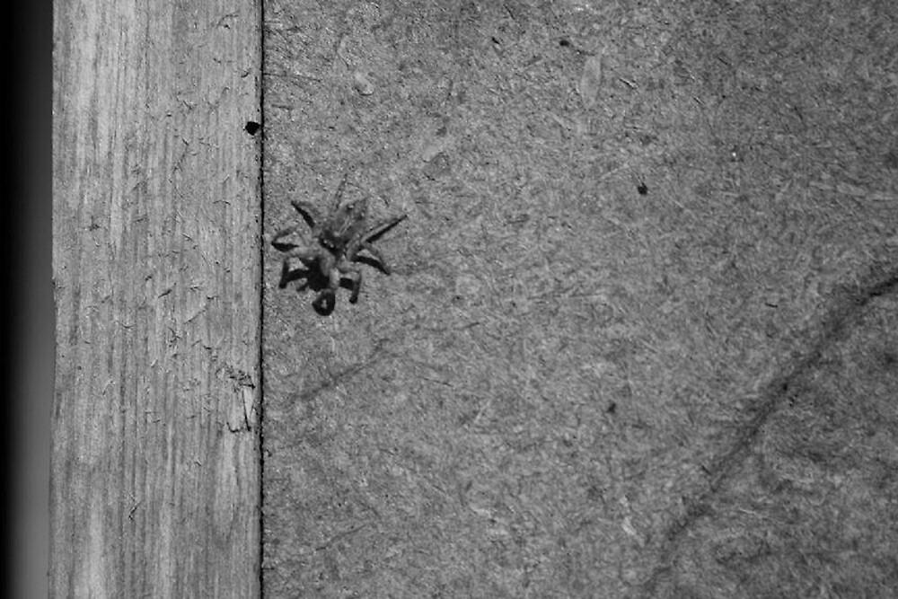 Arachnophobia by photophreak