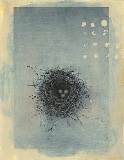 Sparrow's Nest by Elena Ray