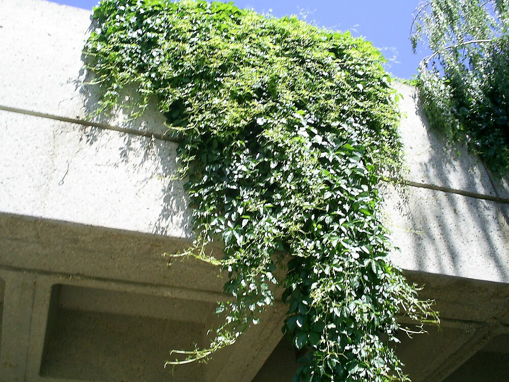 vines on roof by oilersfan11