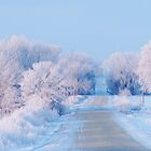 Frosted Country Road  by lorilee
