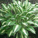 green plant by oilersfan11