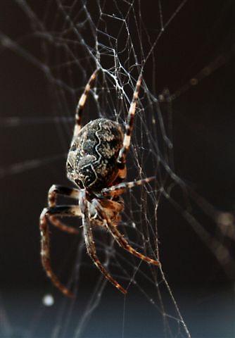 Arachnophobia by Amandalynn Jones