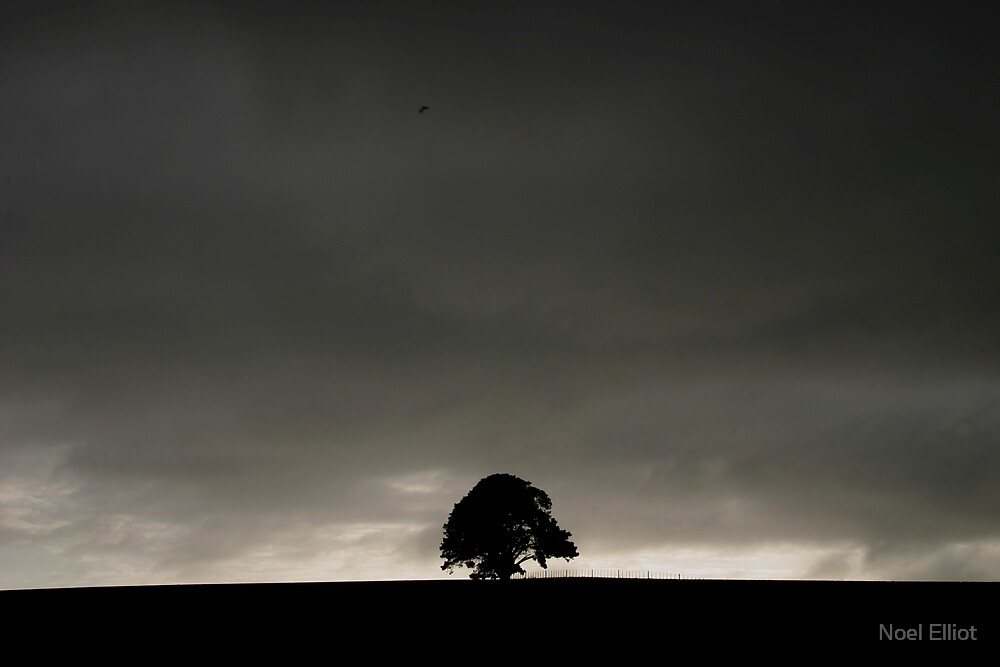 Solo Tree #4 by Noel Elliot