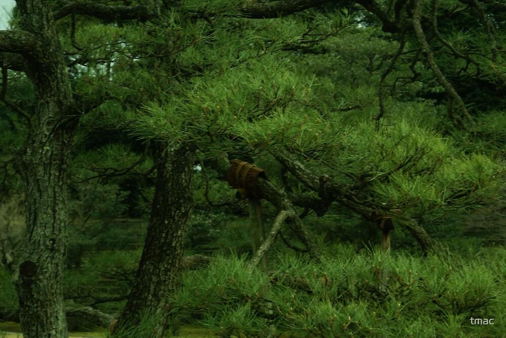Japan - Wooden Braced Branch by tmac