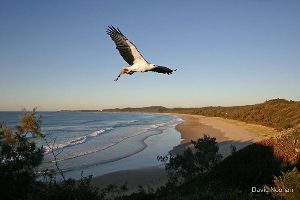 Sea Eagle by David Noonan
