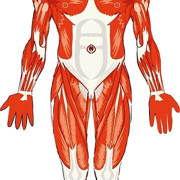 Male Musculature Man by MerryPerry