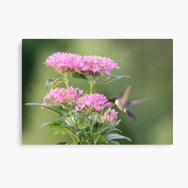 Hummingbird and Blooms Metal Print