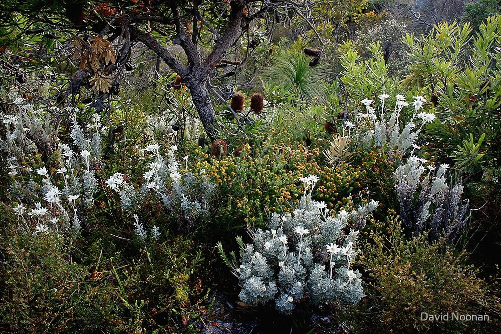 Flannel Flower Grove by David Noonan