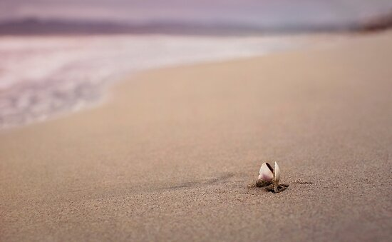A Seashell's Repose by Mariya Olshevska