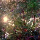 Fairy grotto by Miranda11