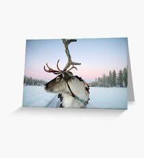 Lapland Reindeer Greeting Card