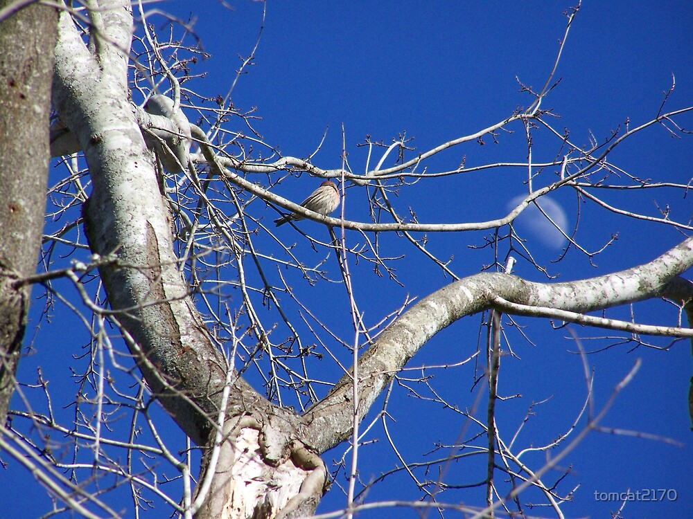 daytime moon by tomcat2170