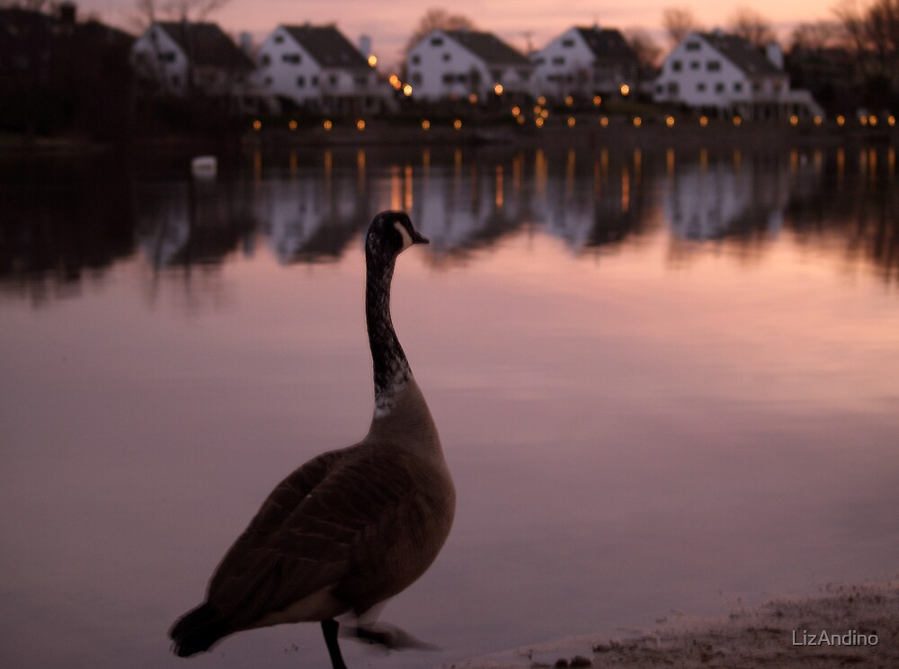Canada Goose at Sunset  by LizAndino