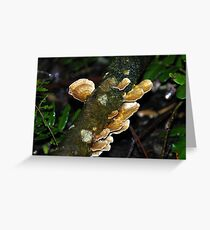 Small delights in Rainforrest Greeting Card