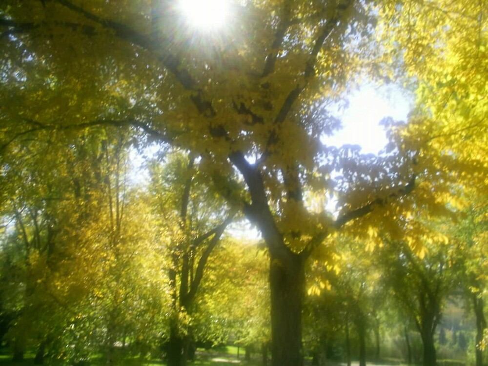 huge yellow trees by oilersfan11