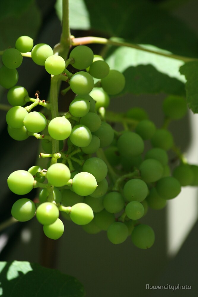 green grapes by flowercityphoto