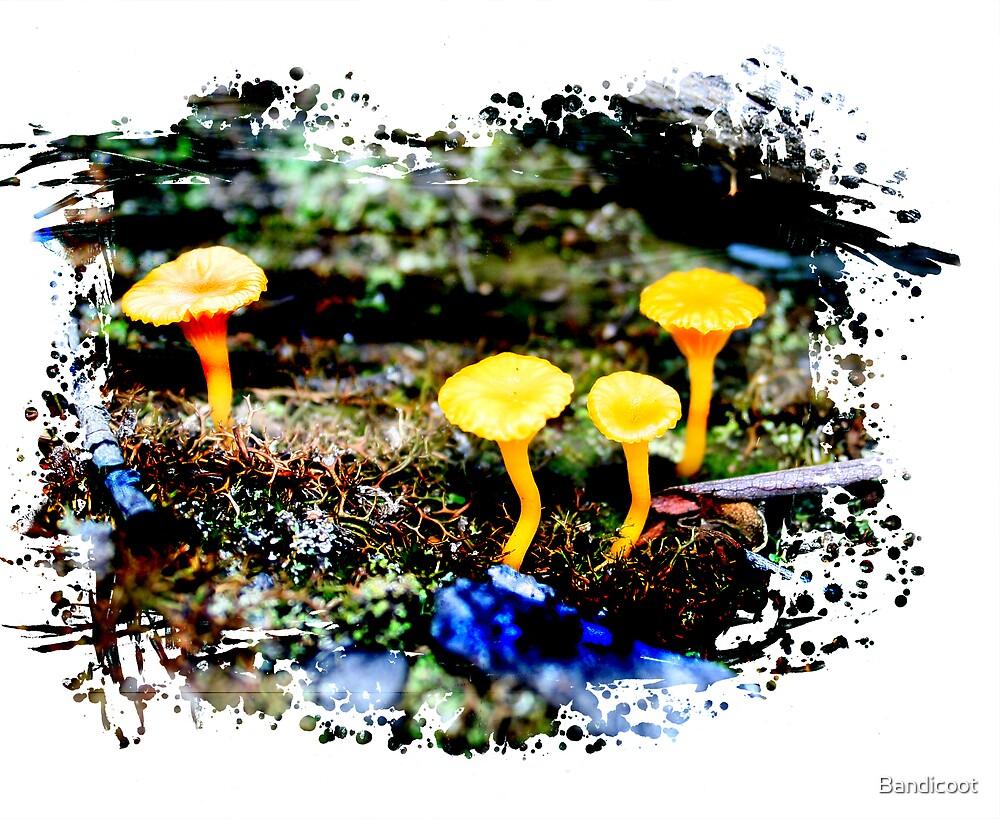 Fungus by Bandicoot