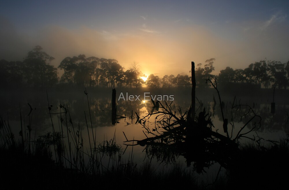 Morning on Timber Lake by Alex Evans