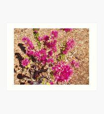 Tennant Creek, NT, Australia - Pink Flowers 1 Art Print