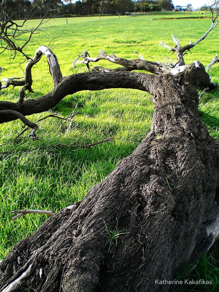 Dead Tree by Katherine Kakafikas