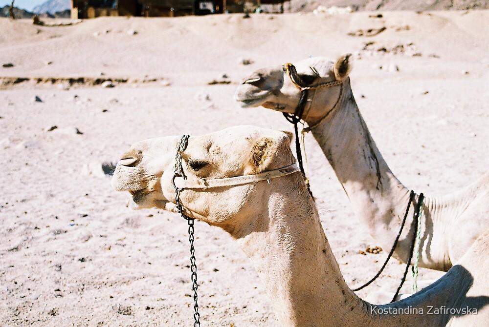 camels by Kostandina Zafirovska