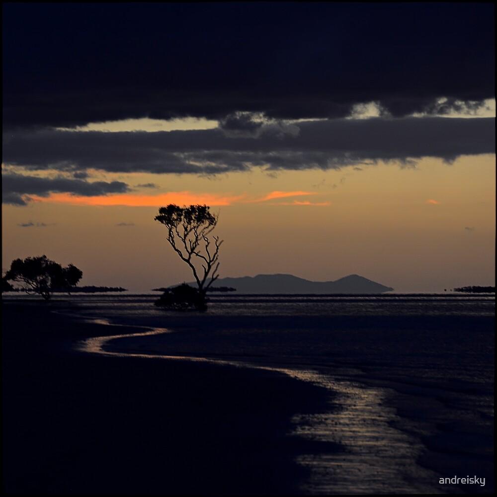 Mangrove tree III by andreisky