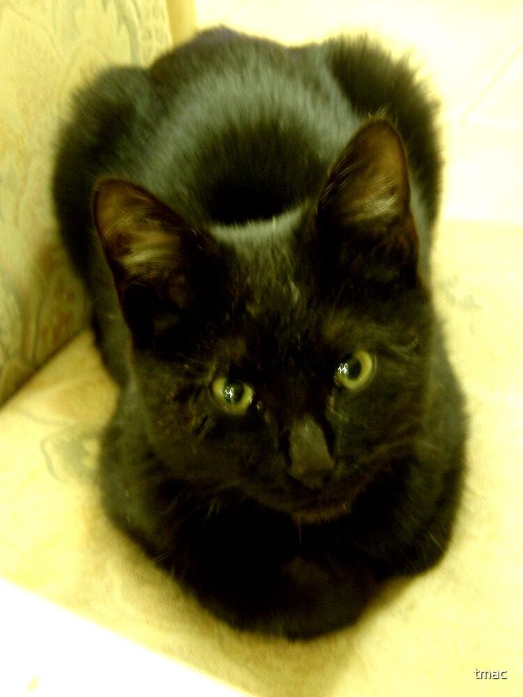 Tennant Creek, NT, Australia - Black Kitten 1 by tmac