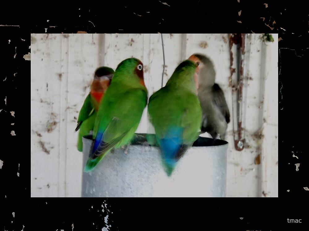 Tennant Creek, NT, Australia - 4 Framed Birds On A Can by tmac