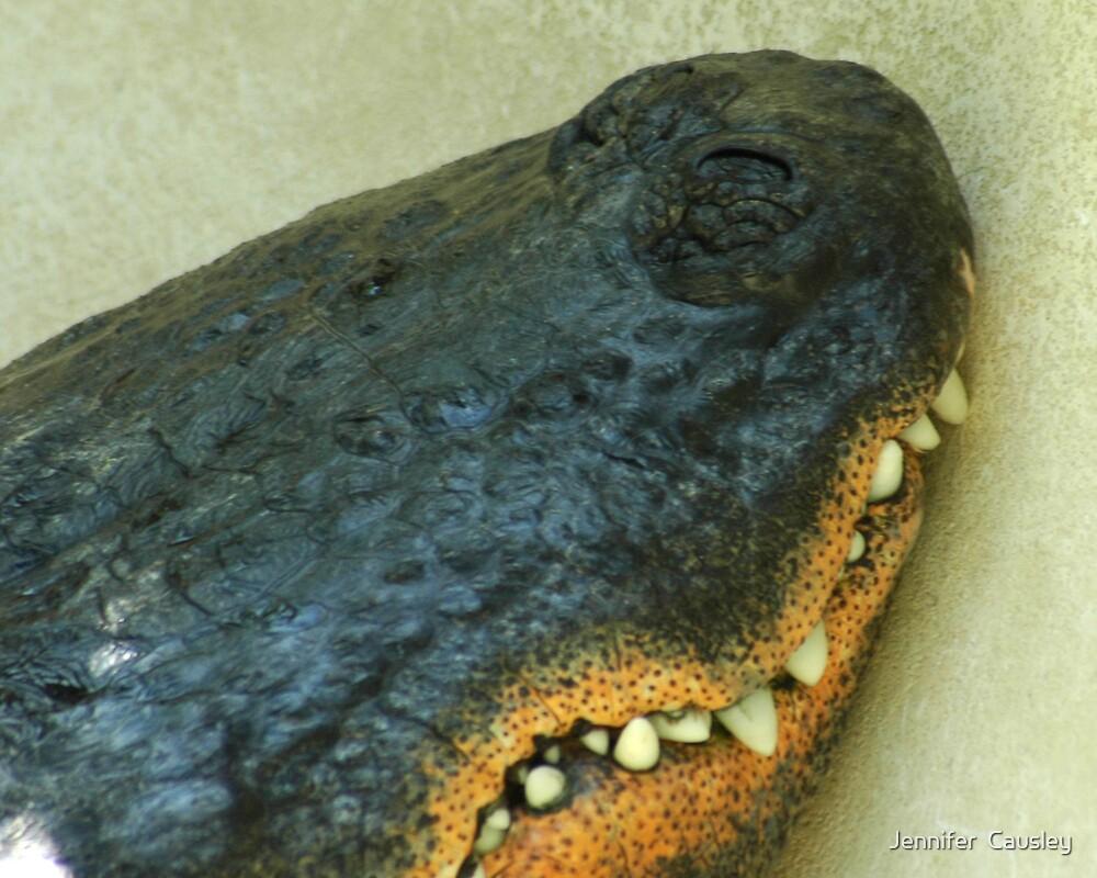 Alligator Teeth by Jennifer  Causley