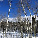 Dusted Aspens by Kara Rountree