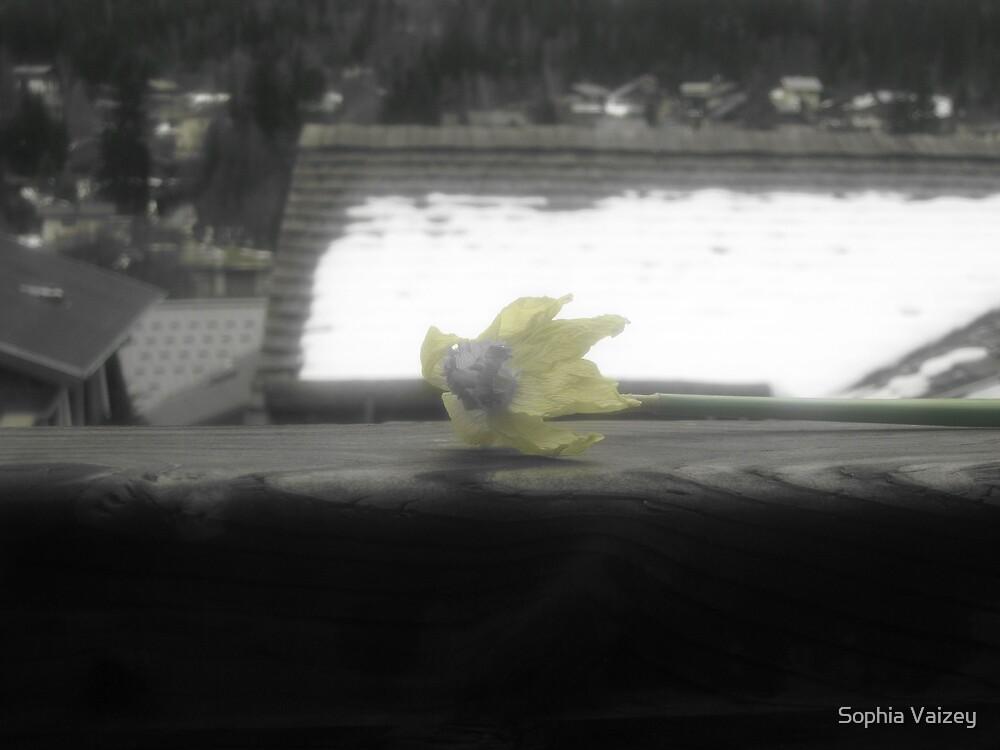 Dying Daffodil by Sophia Vaizey