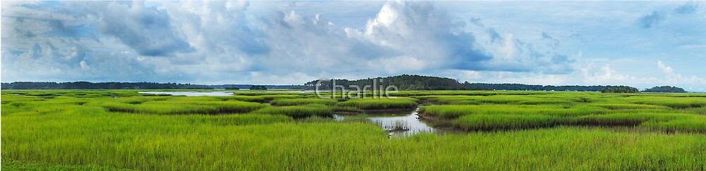 Pigeon Island - Early Summer Marsh by Charlie
