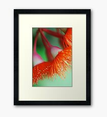Blossom Of The Gum Framed Print