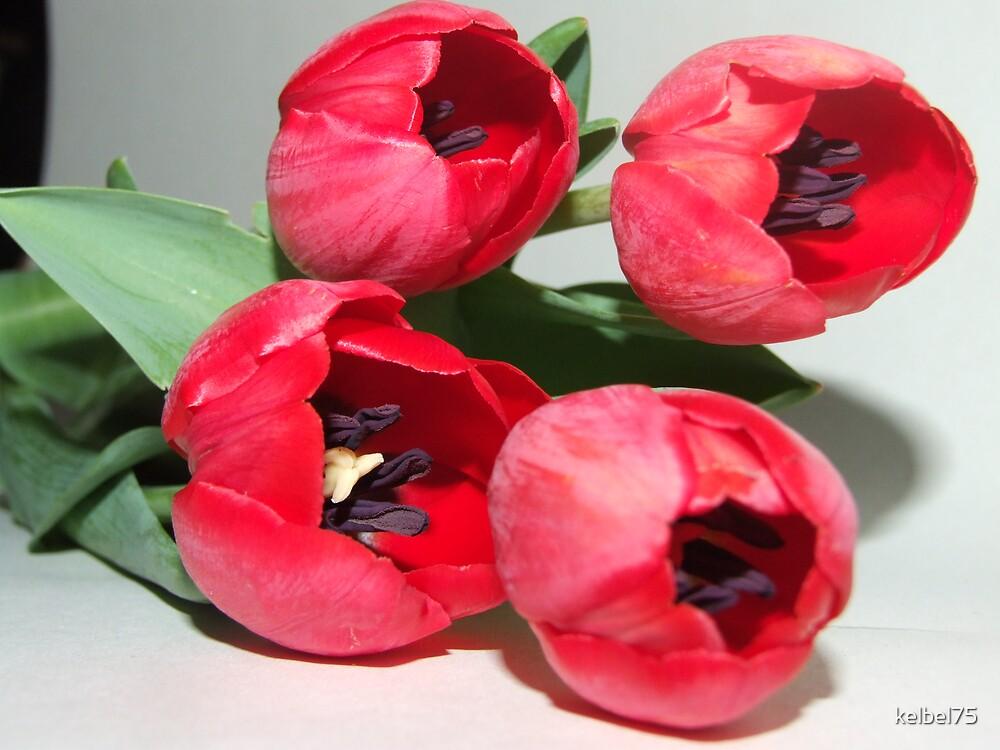 Red Tulip by kelbel75