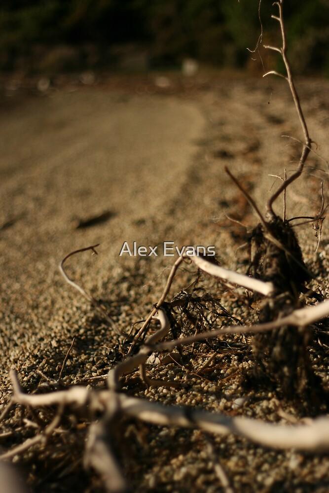 Drift wood, Picton NZ by Alex Evans