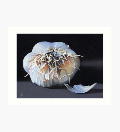 Garlic Bulb fine art painting Art Print