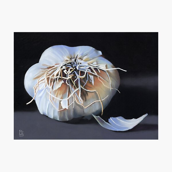 Garlic Bulb fine art painting Photographic Print
